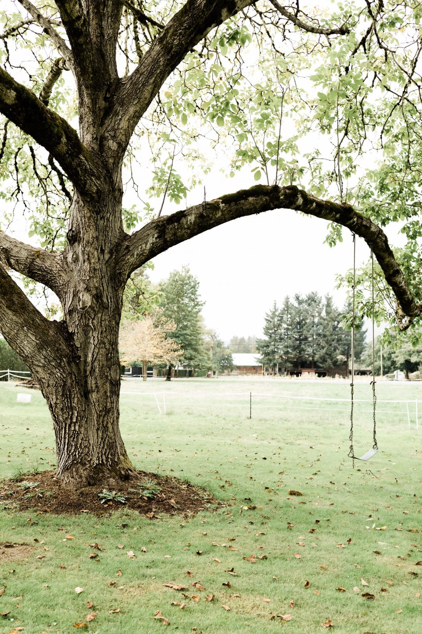 Swings on the tree | Vancouver wedding photographer