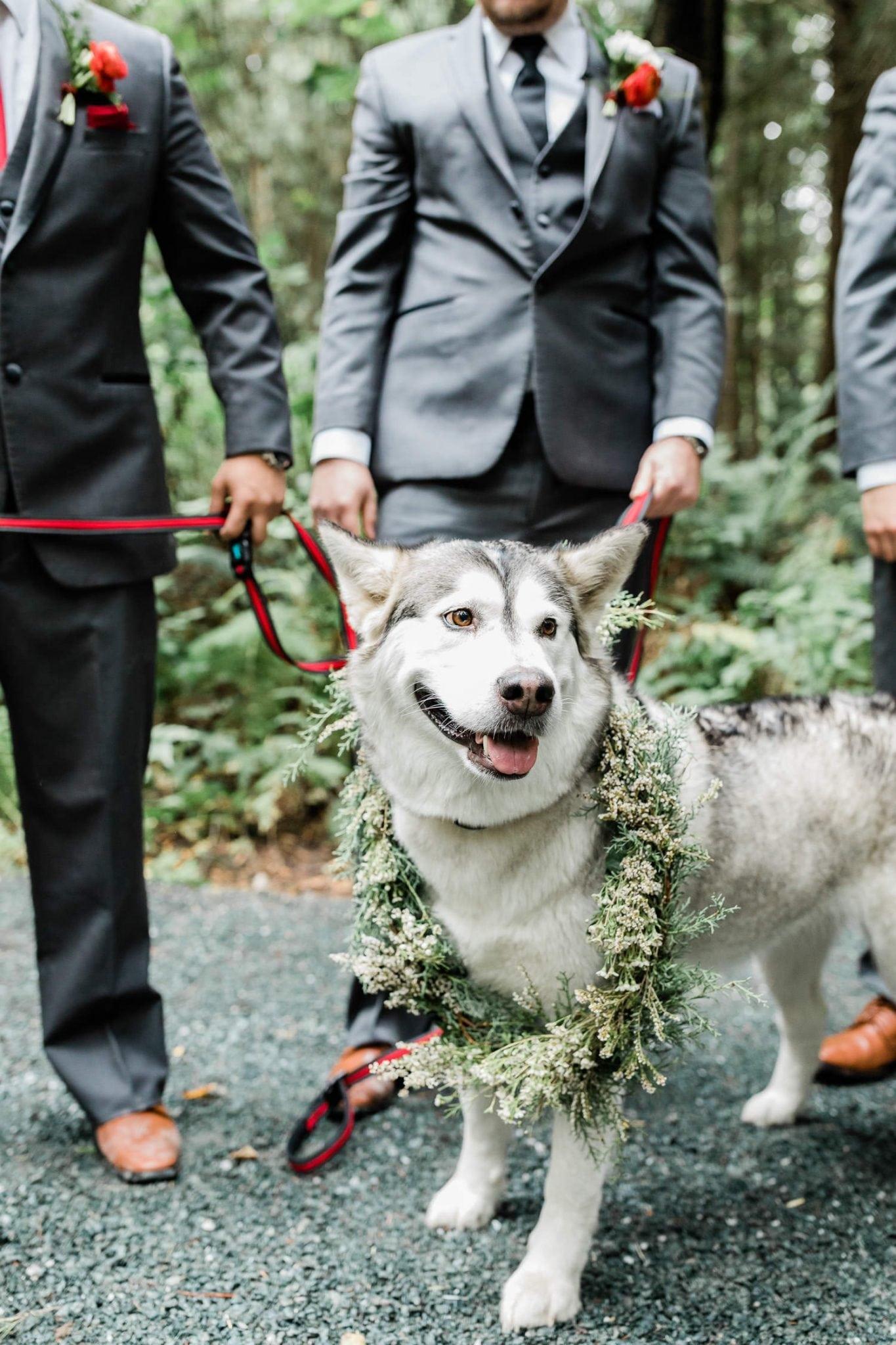 Dog with wedding wreath | Vancouver wedding photographer