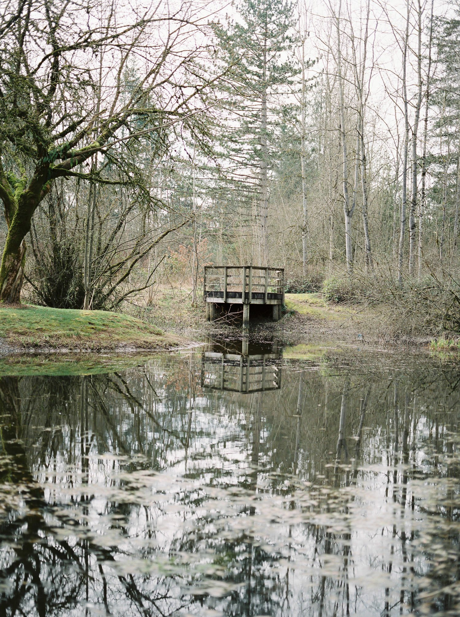 Pond at Campbell Valley Park