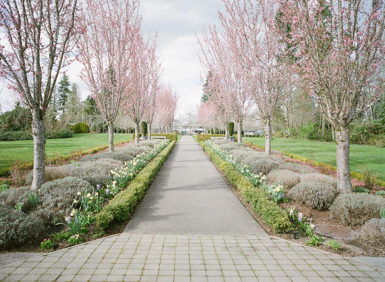 Fleetwood park cheery trees