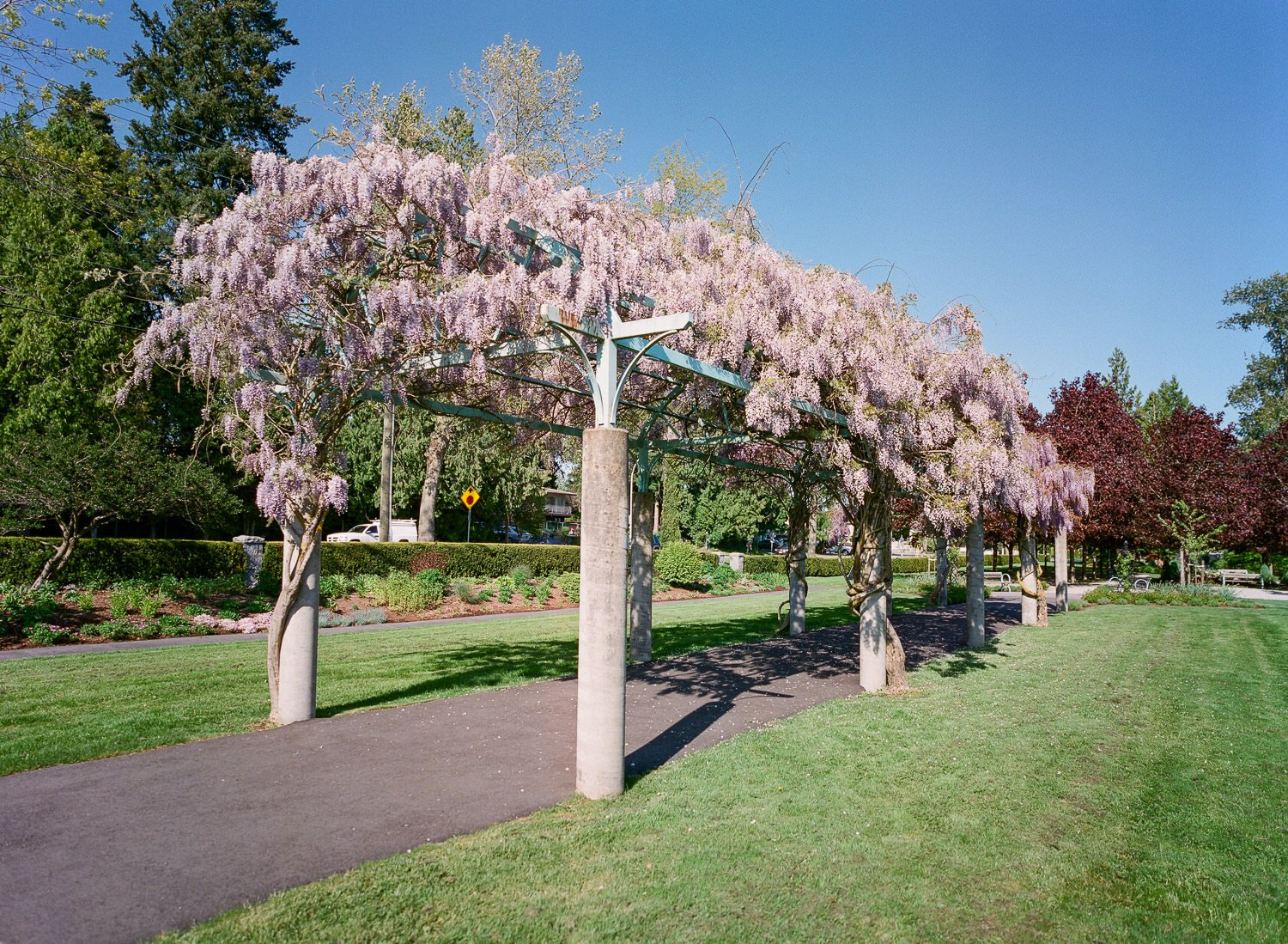 Pergola with flowers blooming